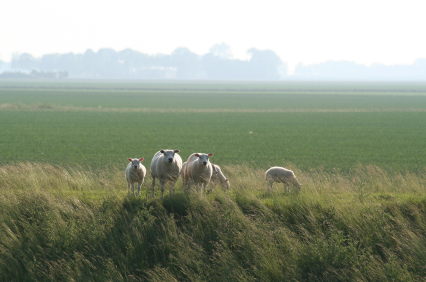 copyright www.fietswandelweb.nl
